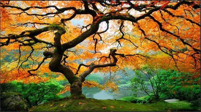 Şarkı Söyleyen Ağaç