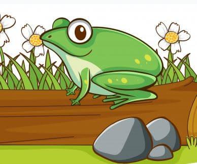 Uçan Kurbağa